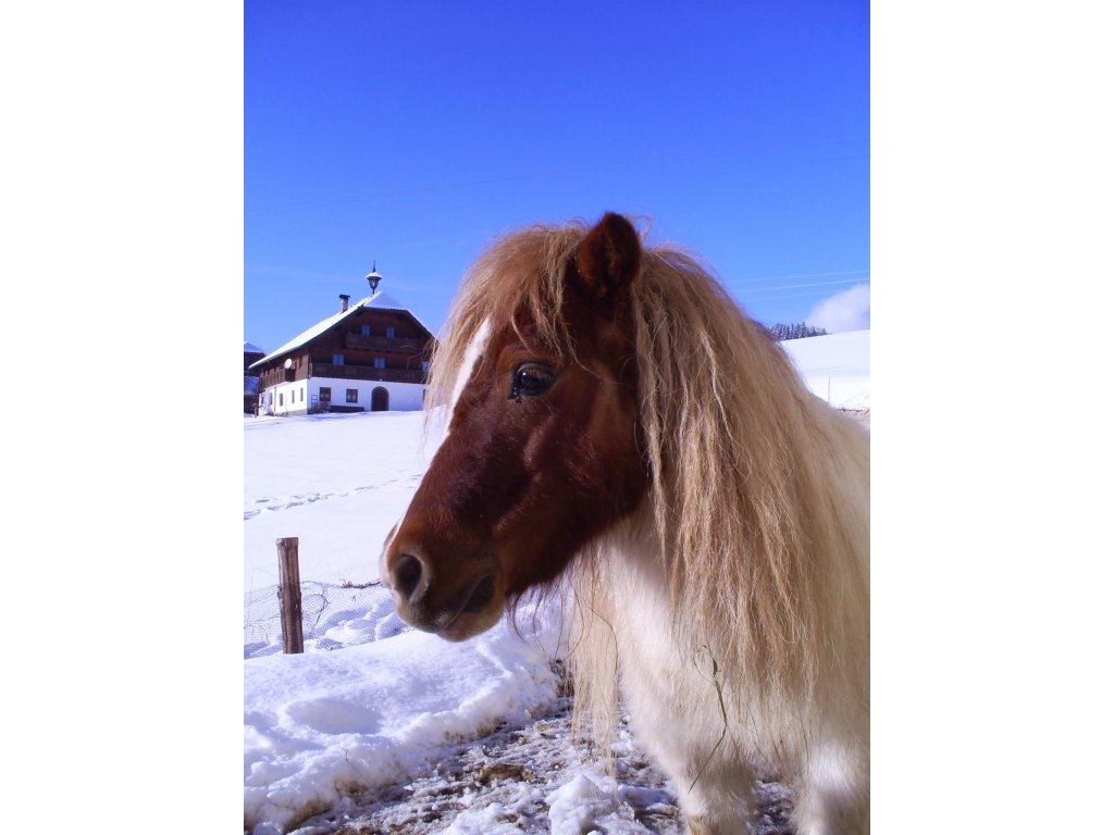 Im winter mini pony für Kinder
